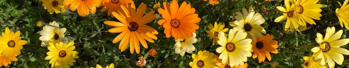 Self-care ideas: yellow and orange flwoers