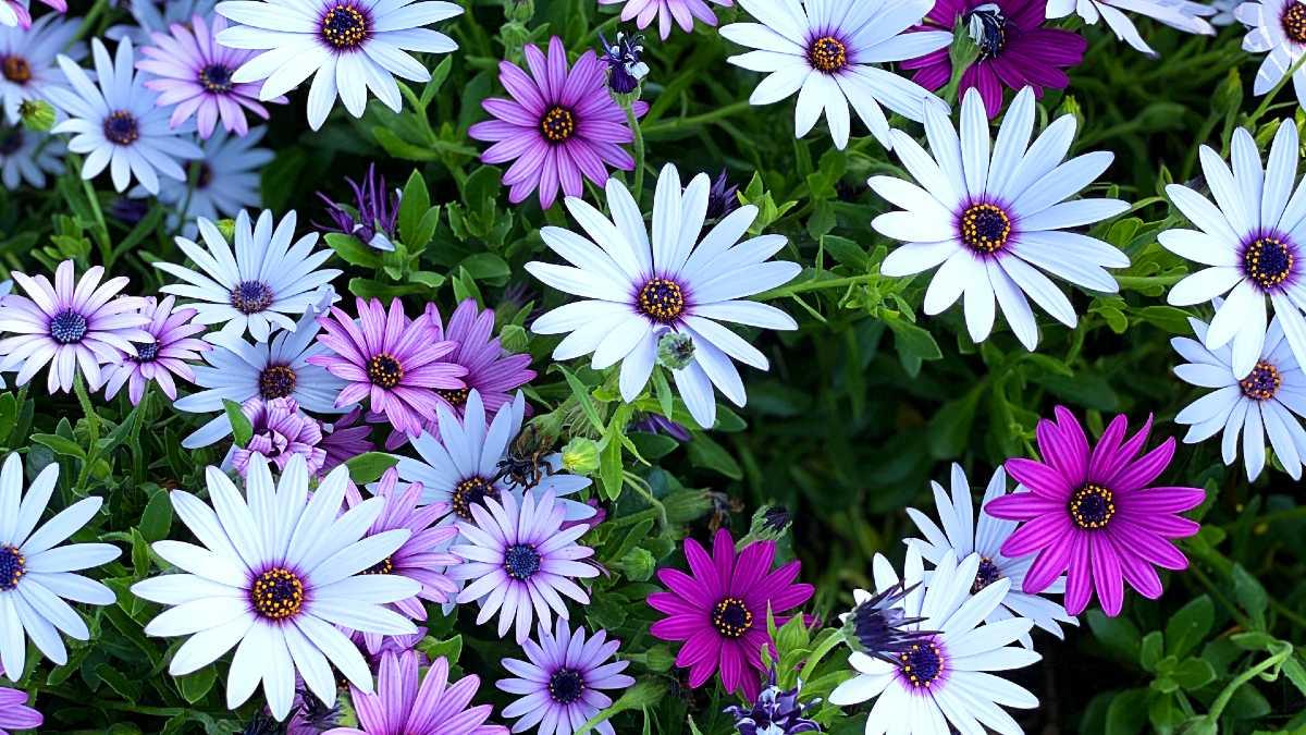 Self-Care Ideas: Flowers
